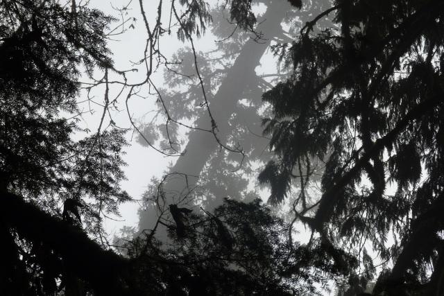 Photograph: Sharron R. McMillan  Foggy Issues