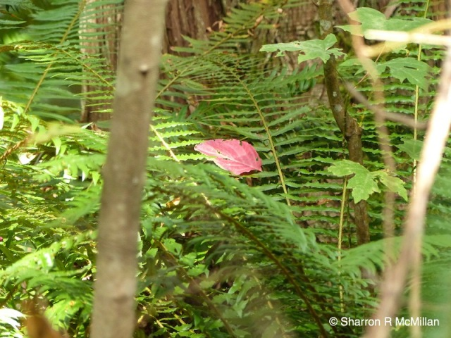 red-leaf-on-fern