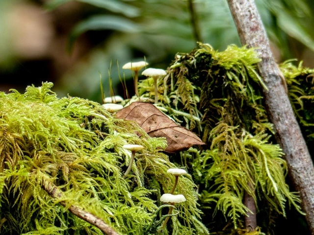 mushrooms-in-moss