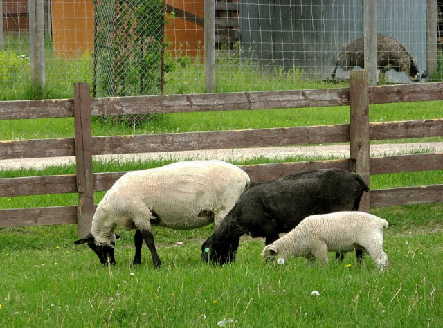 008-eglis-sheep-farm-1